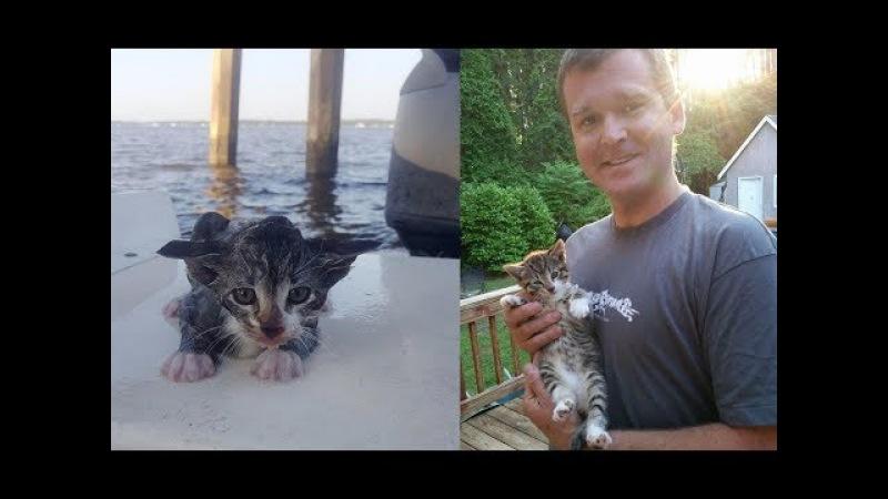 Котёнок летел с моста в реку... Надежды на спасение не было, но у судьбы были друг ...