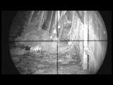 Убив 120 щурів з пневматичною рушницею з оптичним прицілом і приладом нічного бач...