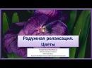 Радужная релаксация  Цветы