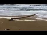 Монстра выбросило на песчаный пляж Джулианадорпа
