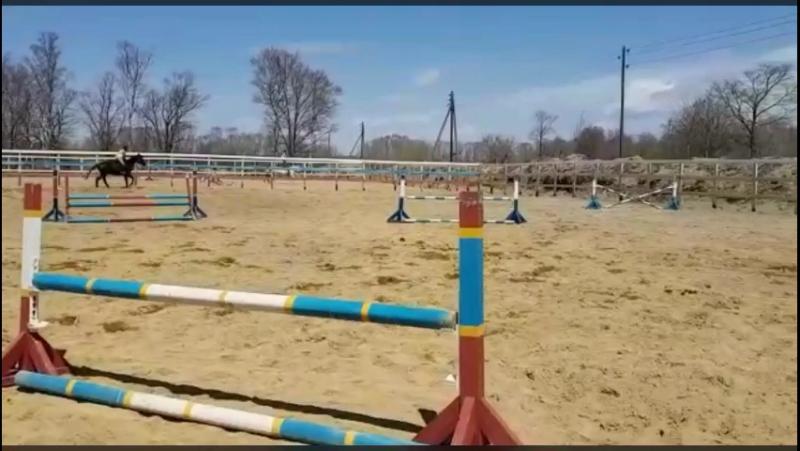 Мои лошадки Кристалина,Вербена и Версаль