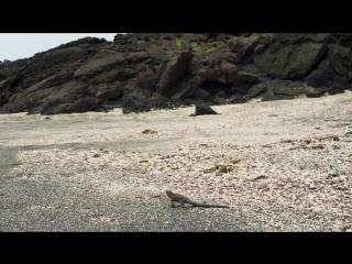 BBC Planet Earth II S02E01 islands Планета Земля 2 серия 1