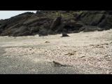 BBC Planet Earth II S02E01 islands // Планета Земля 2 серия 1