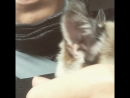 Котик😸нашли дачному беспризорнику дом :) теперь у него есть семья . Помогайте нашим младшим братьям ^)Люблю животных:) Только о
