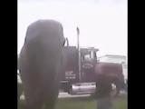 Когда пойдете в цирк, вспомните это видео. Цена радости...