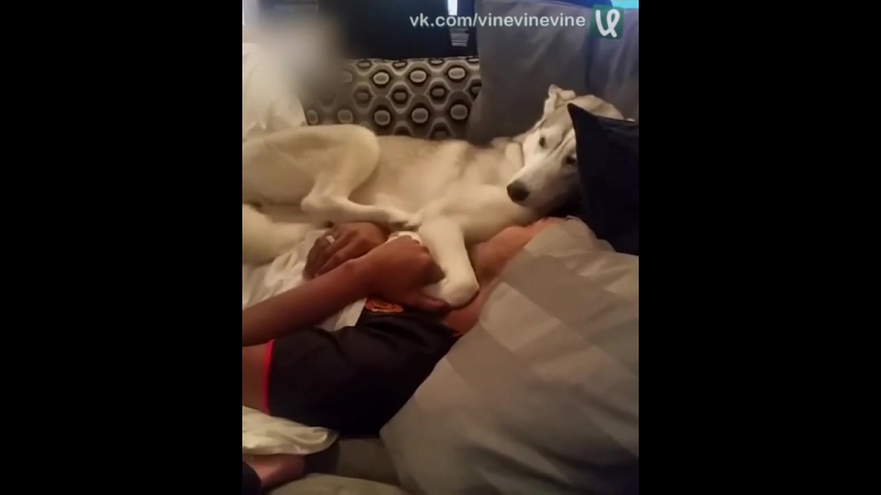 Собакен обнимает хозяина