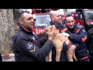 В Турции спасли щенка с помощью роботизированной руки