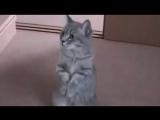 Прототип кота в сапогах