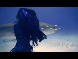 (House) Paul Mauriat - Alouette (X-Mode - Remix В Мире Животных (Animals)