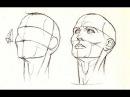 Как Нарисовать голову спереди сбоку и с любого ракурса ПРОСТОЙ СПОСОБ Пропорции головы