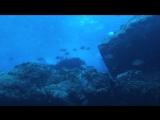 Азорские острова. Часть 1: Акулы, киты, манты (2012) BDRip 720р