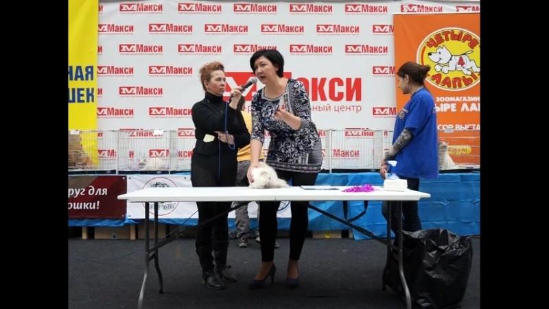 Наша СУПЕР ПДШечка девочка MILKAHOLIC KEIKO на WCF ринге молодых у Елены Лаврентьевой