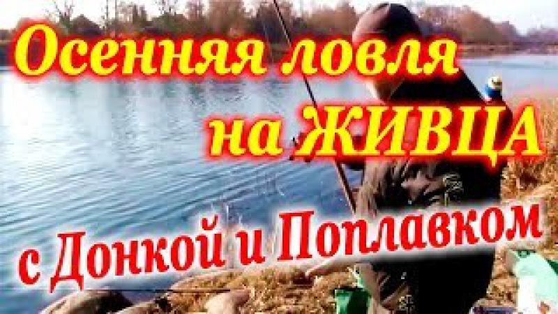 Ловля СУДАКА на ЖИВЦА с берега осенью на ДОНКУ и ПОПЛАВОК