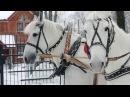 Дед Мороз на тройке лошадей - заказ Деда Мороза