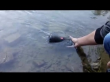 Тест-драйв портативной bluetooth колонки JBL Charge 3. Погружение в воду