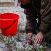 Грибы и ягоды в Белгороде. Белый-гриб31.рф