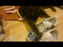 Кот-извращенец ночные валяния.