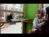 Тима в контактном зоопарке (игрунки)