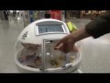 Suisse &amp Technologie  Quoi de plus chaleureux qu'un robot pour