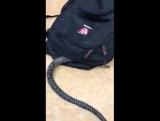 змея ест хомяка!