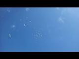 Полет красноголовых голубей_HIGH. vk.comkazakstan_kus