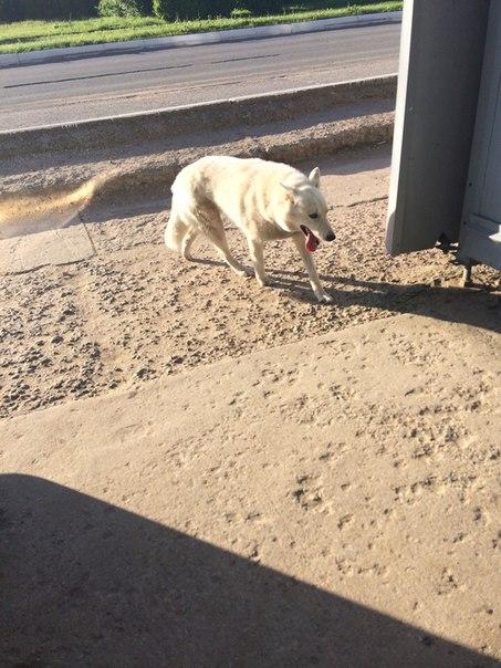 #подписчики  Может кто потерял,или знает чья собака бегает на Маклино