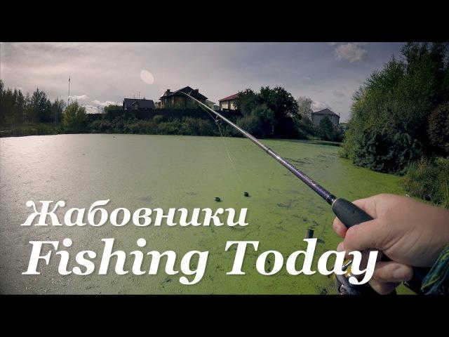 Щука запрессованных водоемов (4 жабовника) - Fishing Today