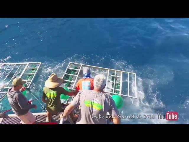 Ужас Белая акула ворвалась в клетку к аквалангисту !