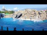 Дельфинарий Батуми Грузия Batumi Dolphinarium: Шоу Дельфинов САМЫЙ ЛУЧШИЙ дельфинарий на...