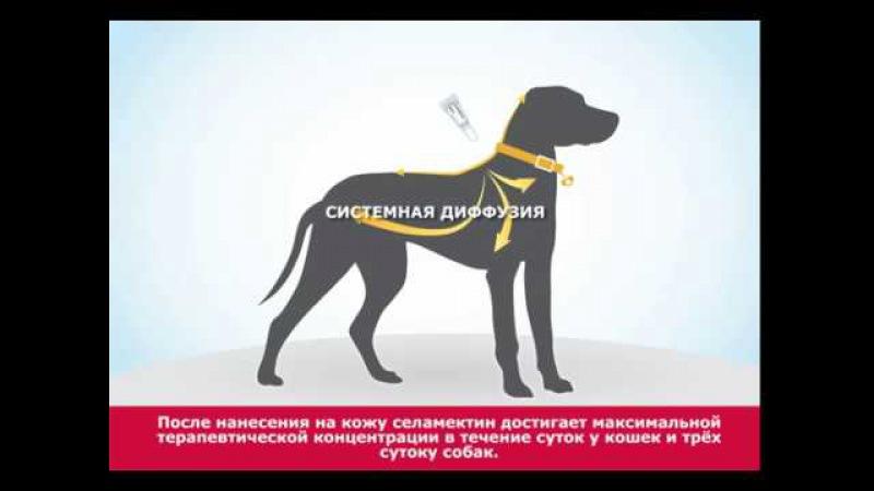 «Стронгхолд» для кошек и собак