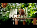 Welcome to the official Animal Planet UK channel