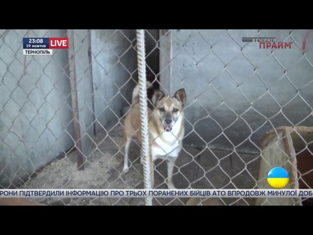 Зооскандал в Тернополе. Почему спасение животных превратилось в настоящий детектив?