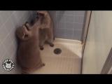 Лучшие видео с енотами. Смешной енот.
