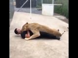 Зачем собачки если есть лев