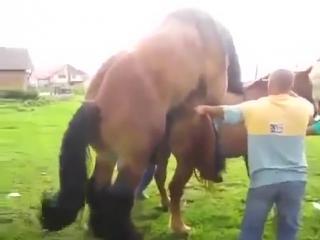 Поиск порно лошадей