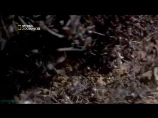 «Великие миграции (2). Зов природы» (Документальный, природа, 2010)