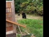 This is the most Canadian way to get bears to leave your garden ?