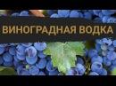 Рецепт виноградной водки в домашних условиях (граппа, чача)