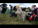 международная выставка собак всех пород, Харьков, стадион Пионер, 24062017, часть 2