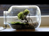 Homemade Bonsai Moss Tree Terrarium