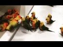 Gang of parrots