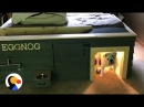 Bulldog Gets THE BEST Dog House Under Parents' Bed   The Dodo