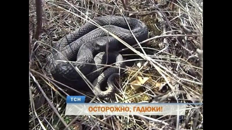 В Пермском крае проснулись ядовитые гадюки