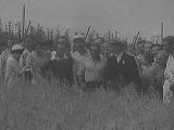 Исторические хроники с Николаем Сванидзе. 1938 год. Вавилов и Лысенко