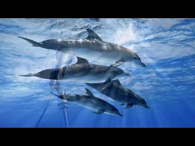 Delfinai Viskas Bus Gerai Albumas Svajones