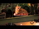 Animatronic Cat Kneazle - Wizarding World of Harry Potter Diagon Alley