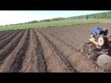 Нарезка гребней для посадки картофеля мотоблоком.
