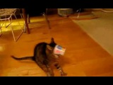 Полёт (кота) шмеля