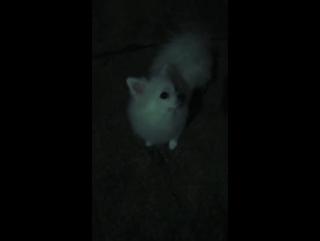 Белый волк 🐺