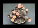 Los cactus más raros